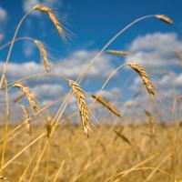 Agrár- és élelmiszergazdaság